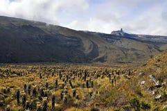 Paramo. El Pulpito del Diablo with paramo ecosystem. Shot done in PNN El Cocuy Colombia Stock Photo