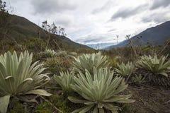 Paramo landscape near Merida with clouds, Venezuela Royalty Free Stock Photos