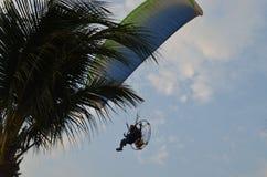 Paramotor, das über die Palmen fliegt Stockfotografie