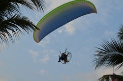 Paramotor over the palms Royalty Free Stock Photography
