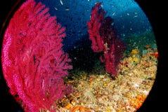 paramunicea subacuático del paisaje Fotografía de archivo libre de regalías