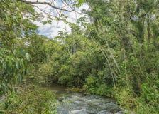 Parana River at Iguazu Park Royalty Free Stock Photos