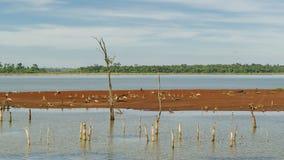 Parana River at Itaipu Dam Park in Brazil Royalty Free Stock Image