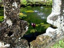 Paranella公园一个美丽的喷泉在澳大利亚 免版税库存图片