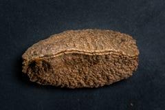 Paranuss Shell auf dunklem Hintergrund Stockfotografie