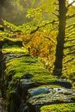 Parapetto del muschio lungo la strada principale storica nella gola del fiume Columbia Fotografie Stock Libere da Diritti