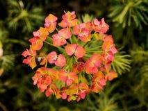 Paraplu van Bloemen Stock Afbeelding