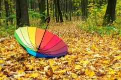 Parapluie dans la forêt d'automne Photo stock