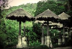 Parapluie dans la forêt de jungle Photos stock