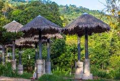 Parapluie dans la forêt de jungle Photographie stock