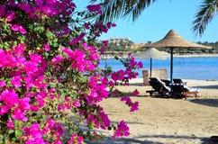 Parapluie de bouganvillée et de plage Photo libre de droits