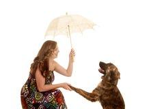 Parapluie de femme secouant la patte de chiens Image stock