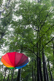 Parapluie et arbres colorés Images stock