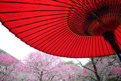 Parapluie rouge traditionnel japonais Photos stock