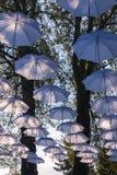 Parapluies accrochant sur des arbres Images stock