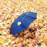 Paraply i parkera som täckas med lönnlöv royaltyfria bilder