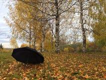Paraply som glömms på gula sidor royaltyfria bilder