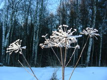 Paraply som täckas med rimfrost Royaltyfri Fotografi
