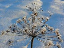 Paraplyer täckas med is Arkivbild