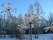 Paraplyer täckas med rimfrost i soligt väder Royaltyfri Fotografi