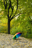Paraplyet i hösten parkerar Arkivfoton