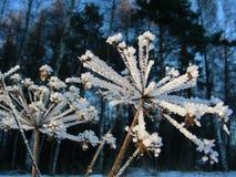 Paraplyet täckas med rimfrost i soligt väder Royaltyfri Bild