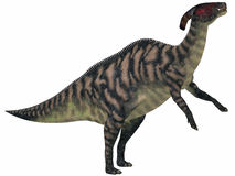 Parasaurolophus Striped on White. Parasaurolophus was a herbivorous hadrasaur that lived during the Cretaceous Period and was bipedal and a quadruped Royalty Free Stock Photos