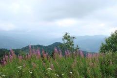Parascha-Gebirgszug nahe der Stadt von Skole, Lemberg-Region ukraine Die Landschaft der üppigen blühenden Vegetation im Sommermee Stockfotos