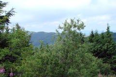 Parascha-Gebirgszug nahe der Stadt von Skole, Lemberg-Region ukraine Die Landschaft der üppigen blühenden Vegetation im Sommermee Lizenzfreies Stockbild