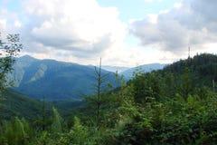 Parascha-Gebirgszug nahe der Stadt von Skole, Lemberg-Region ukraine Die Landschaft der üppigen blühenden Vegetation im Sommermee Stockfotografie