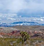 Parashant-Winter Vista stockbilder