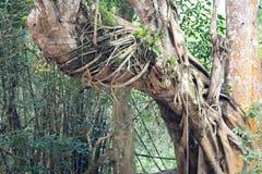Parasit auf Baum Lizenzfreie Stockbilder