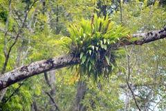 Parasit auf Baum Lizenzfreie Stockfotos
