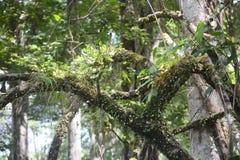 Parasit auf Baum Lizenzfreie Stockfotografie