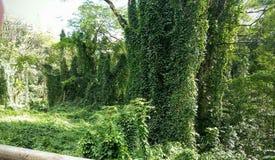 Parasit för ett träd Royaltyfri Fotografi