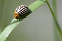Parasite Image stock