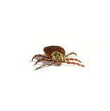Parasite tick isolated on white