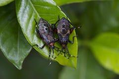 Parasites de jardin photographie stock