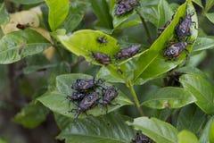 Parasites de jardin photo libre de droits