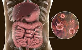 Parasitic infection of intestine. 3D illustration showing close-up view of an abstract parasite and anatomy of human digestive system royalty free illustration