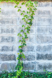 Parasitic old walls. Stock Images
