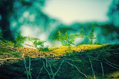 Parasitic plant moss and lichen on tree trunk Stock Photos