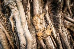 Parasitic plants Stock Photography