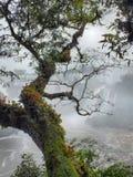 Parasitic plants overlooking Iguacu Falls Royalty Free Stock Photos
