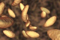 Parasitic protozoans Toxoplasma gondii in tachyzoite stage Royalty Free Stock Images