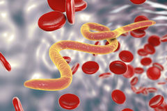 Parasitic worms in blood Stock Photo
