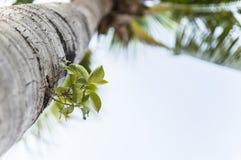 Parasitväxt i en gömma i handflatan Arkivbild