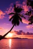 Paraíso cor-de-rosa Imagens de Stock