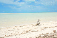 Paraíso das Caraíbas da ilha de Holbox Fotos de Stock Royalty Free