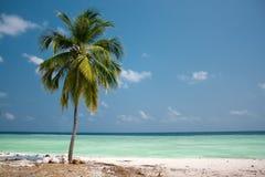 Paraíso de la isla - palmera Imágenes de archivo libres de regalías